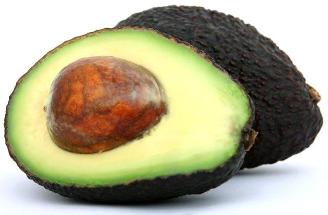 Avocado - Baum aus Kern züchten